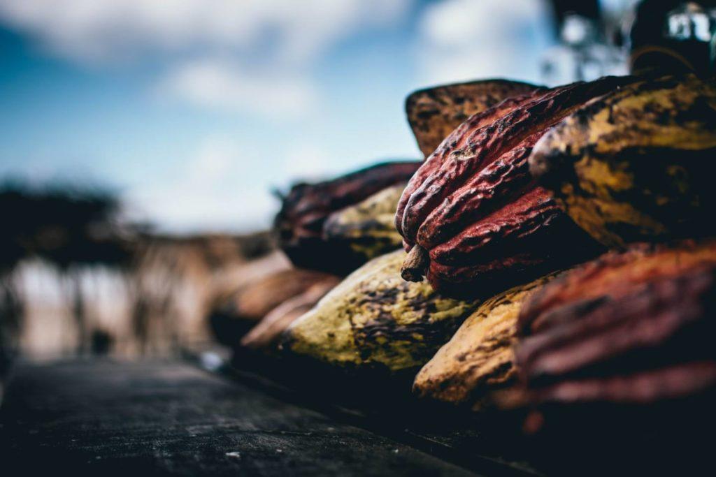 コーヒー豆とカカオ豆は実は全く違う植物