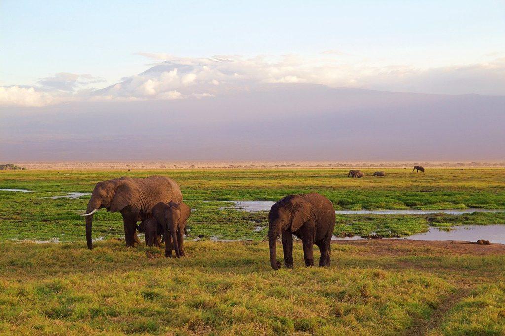 ケニアコーヒーの主な産地