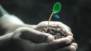 コーヒー豆のおすすめ活用法8選!かすの上手く再利用しよう【厳選】