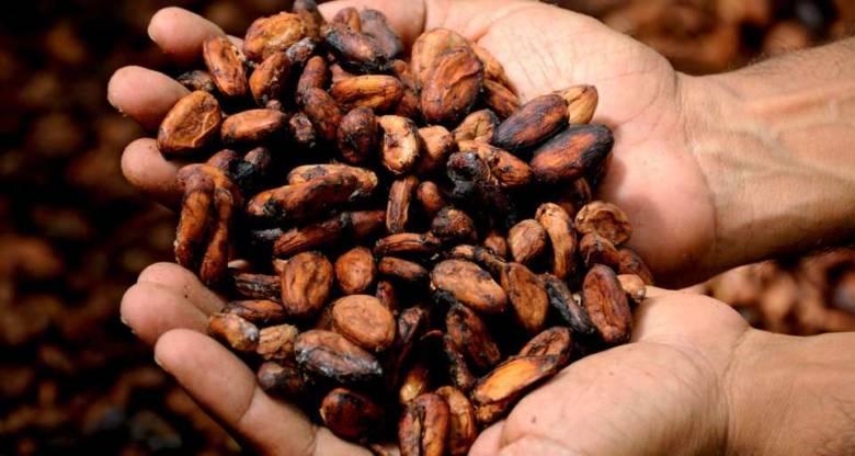 コーヒー豆とカカオ豆の違いとは?意外な関係性が明らかに【簡単】
