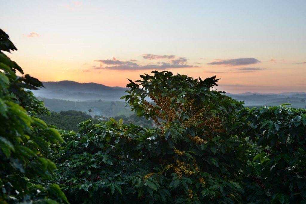 世界のコーヒー豆の特徴