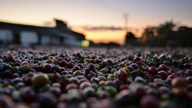 コーヒー豆の特徴とは?種類や産地で変わる味の違いから選び方まで