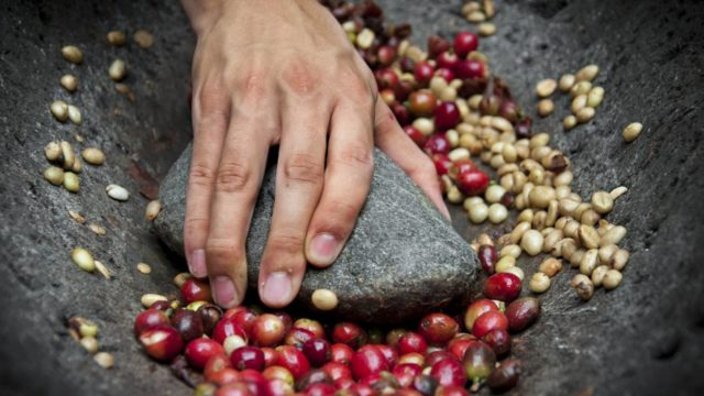 コーヒー豆のナチュラルとは?運命が分かれる3つの処理方法をご紹介