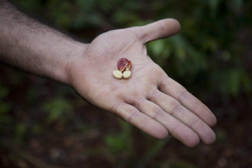 コーヒー豆の栽培条件は科学的に4つある