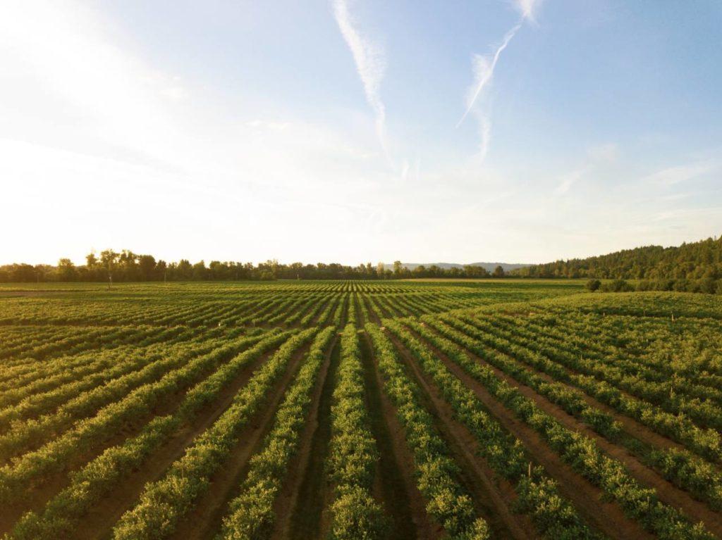 ブラジルコーヒー栽培の歴史