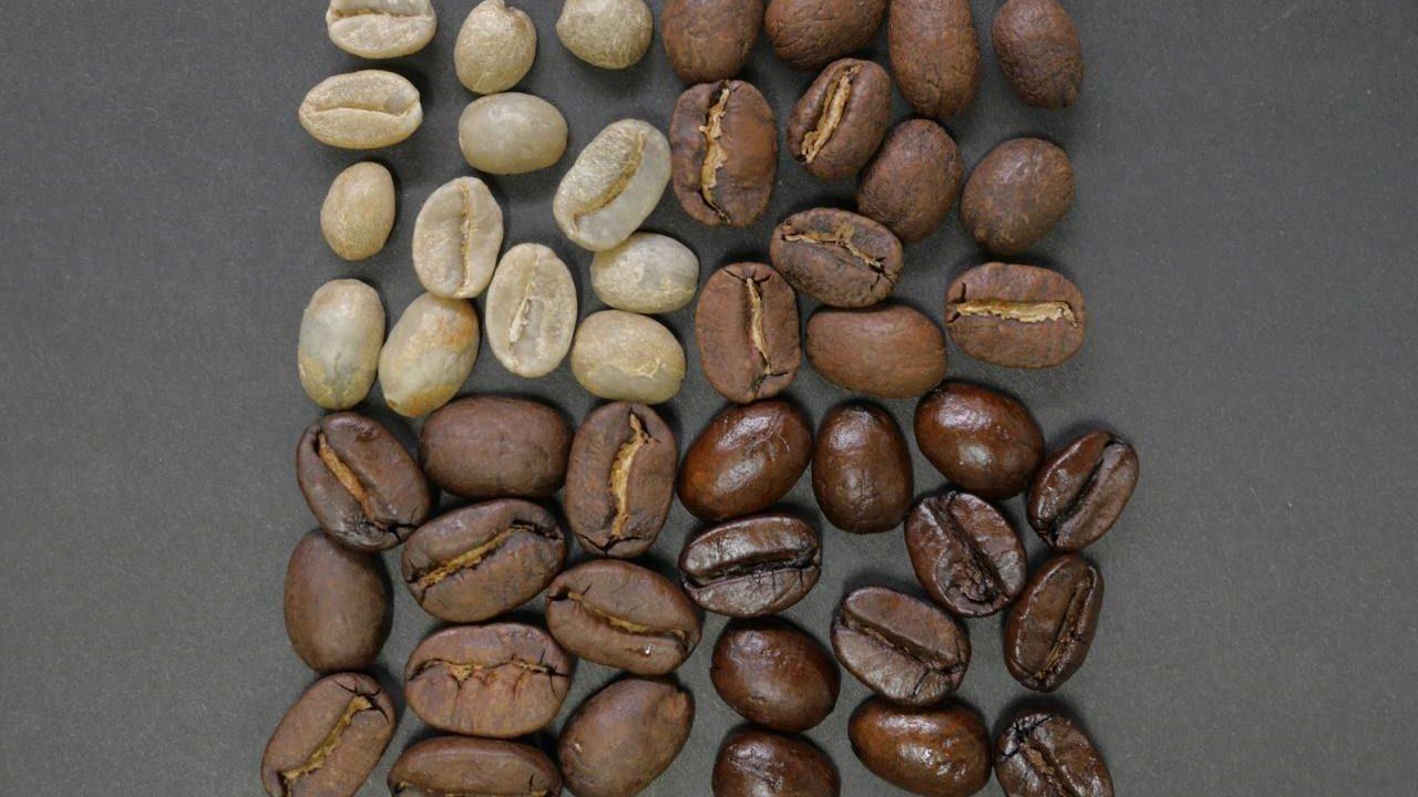 ロブスタ種とアラビカ種の違いとは?コーヒー豆の品種の特徴を解説