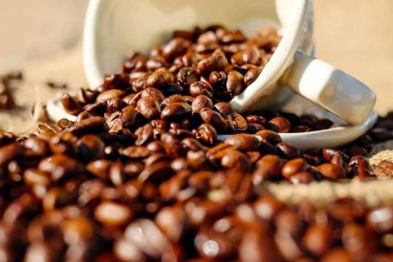 コーヒー豆・ロブスタ種の特徴