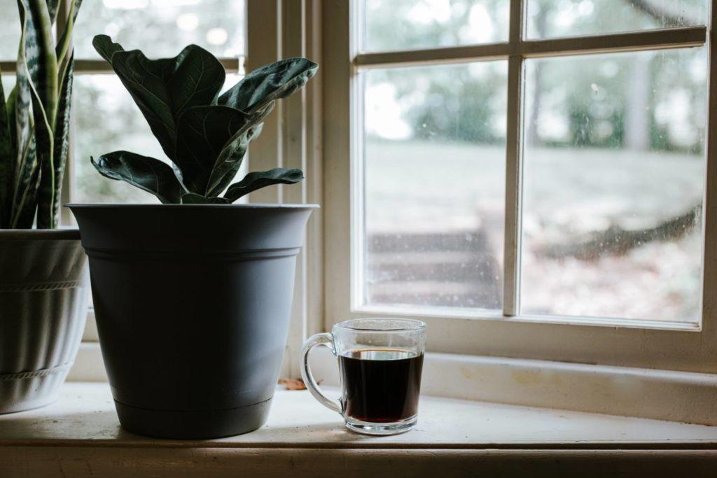 ジャコウネコから作られるコーヒーを一度試してみよう!