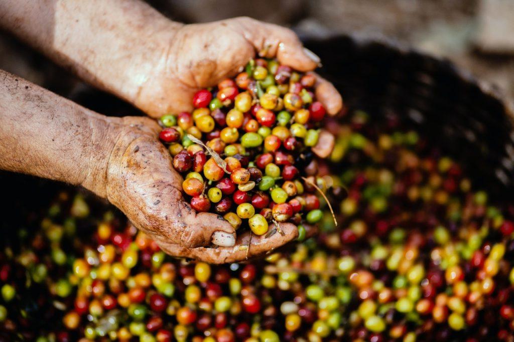 自分が買いたいコーヒー豆の値段相場を把握しよう!