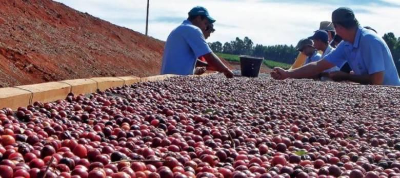 タリーズのコーヒー豆の産地