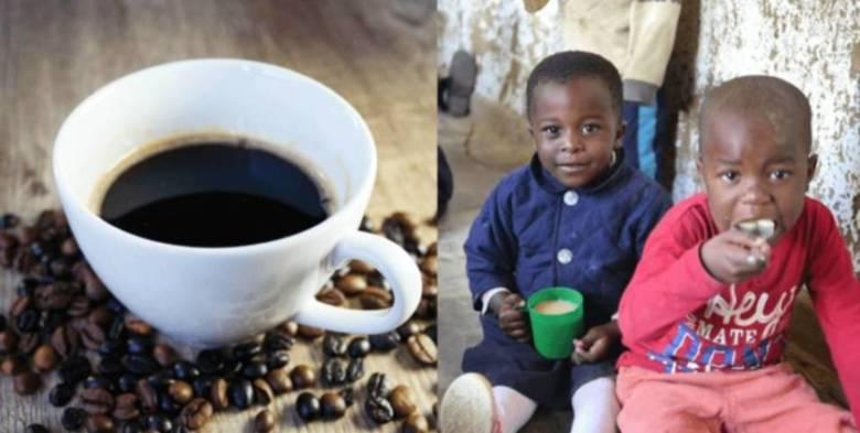 マラウイコーヒーの品種