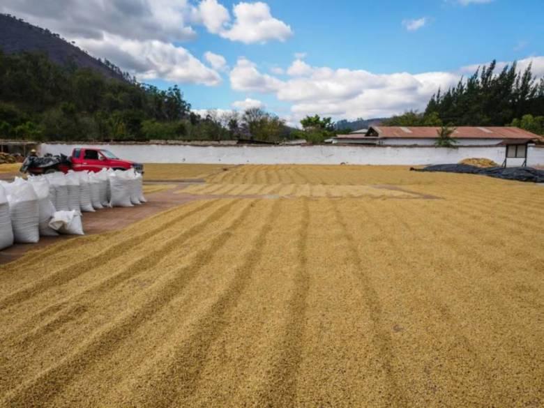 メキシコのコーヒー農園