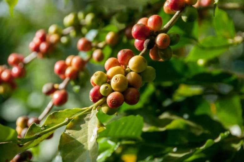 メキシコ産のおすすめコーヒー豆3選
